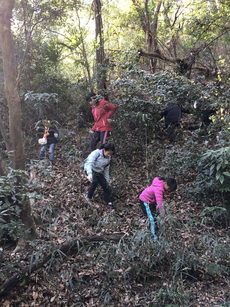 実体験 森の探検